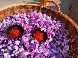Panier de fleurs de safran