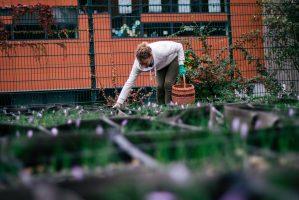 Récolte safran Montrouge